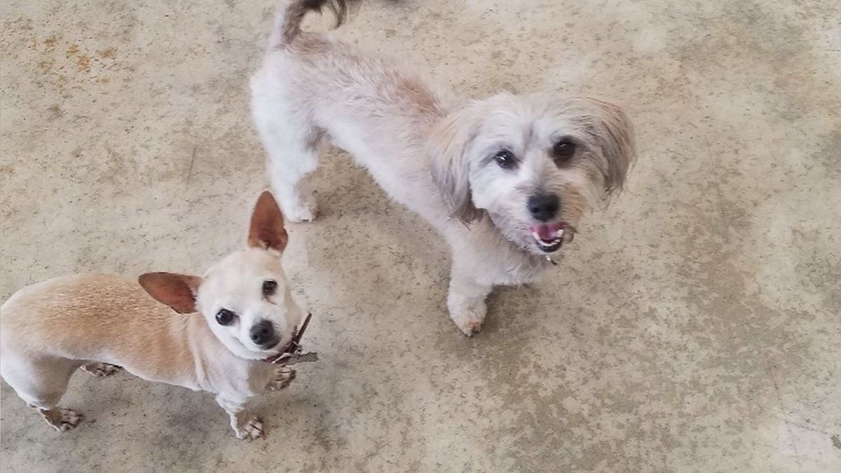 Chloe and Muppet are looking for a home together. (Sturgis/Meade County Animal Shelter)