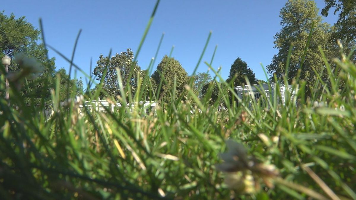 The city of Rapid City was awarded a grant to help with mosquitoes. (KOTA)