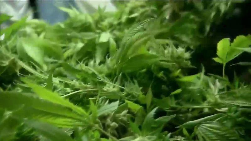 Reaction to the lawsuit filed to stop recreational marijuana in South Dakota