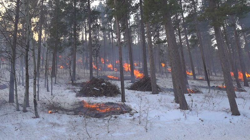 The Forest Service lit the piles ablaze in an effort to manage fire risk.