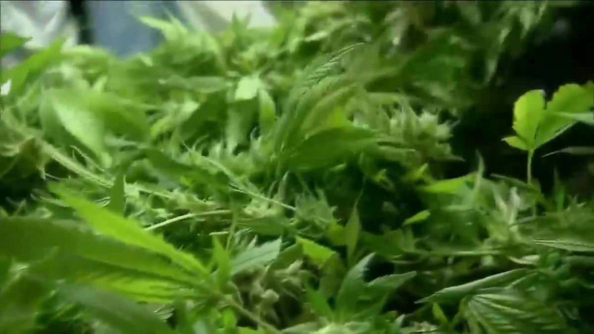Reaction to the lawsuit filed to stop recreational marijuana in South Dakota