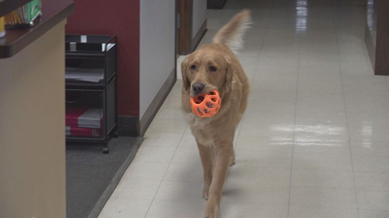Rapid City Fire Chief Jason Culberson's dog he brings to work.