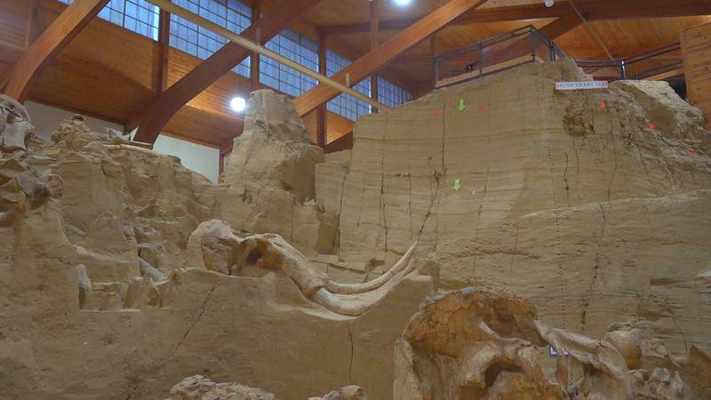 Mammoth Site finds new way to prepare old bones