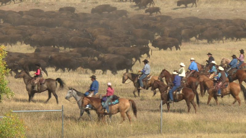 Riders can be seen pushing the main herd across the northern portion of the roundup route at...