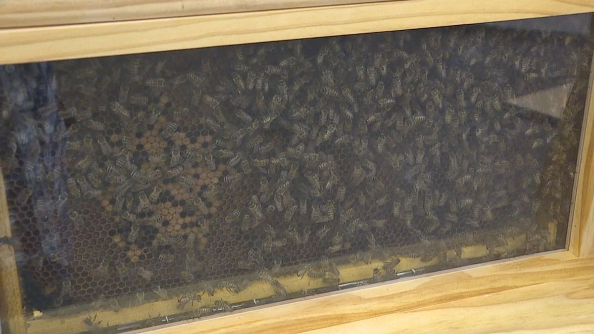 Rapid City could become a BEE City USA affiliate. (KOTA)