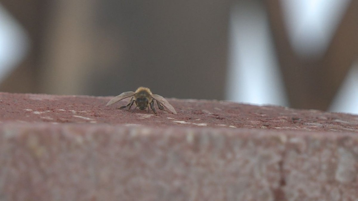 Close up of a bee near its hive in Rapid City.