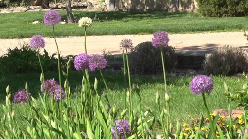 Walk through the Botanical Gardens