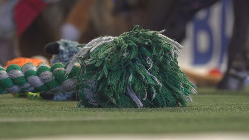 Dogs had to get a toy to the end zone.