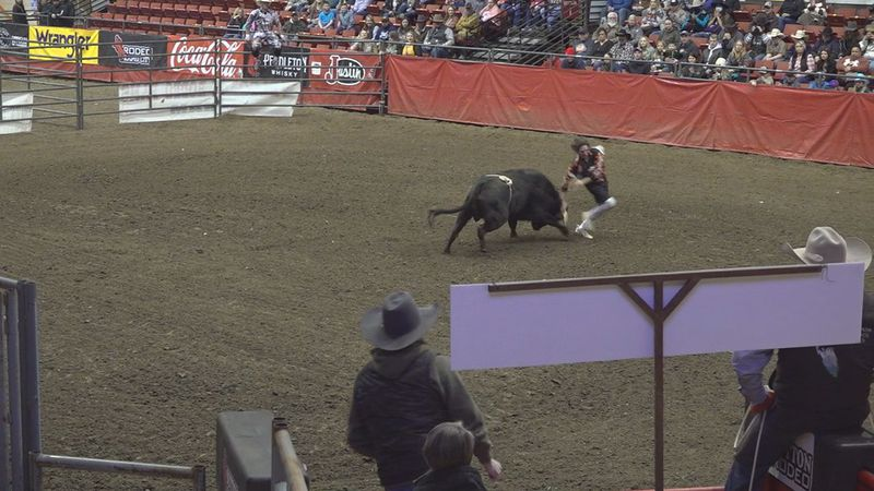 Bullfighting competition at the 2021 Black Hills Stock Show and Rodeo in Rapid City, S.D.