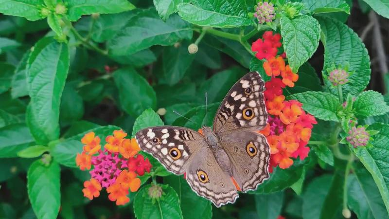 A butterfly rests on a plant.