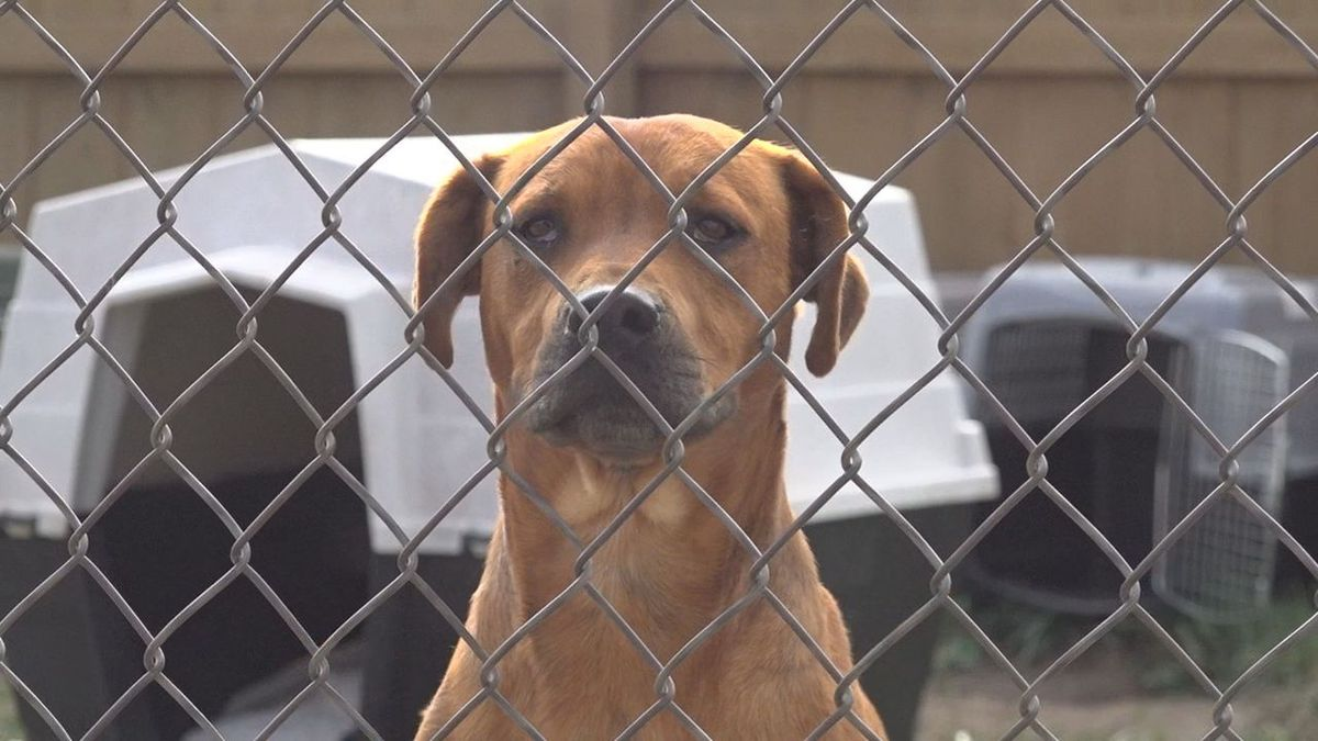 Black Hills law enforcement seized more than two dozen dogs north of Whitewood.